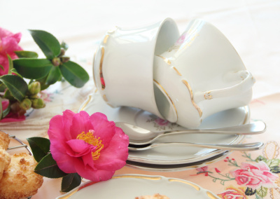 Beautiful camellias with two vintage teacups laying on saucers.